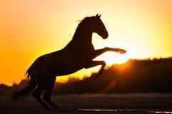 抚养马sihouette 免版税图库摄影