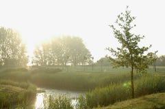 护城河结构树 库存照片