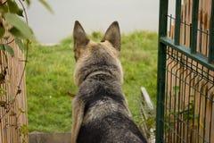 护羊狗的一只本地狗 库存照片