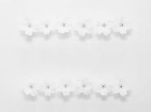 从报春花的花的花卉框架在白色背景的与文本的空间 库存照片