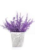 报纸罐和紫色分支 图库摄影