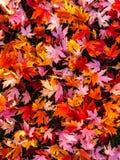报道地面的充满活力的秋叶 免版税图库摄影