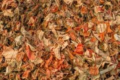 报道地面的干叶子葡萄树 免版税库存照片
