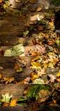 报道木步的秋叶 图库摄影