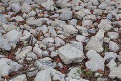 报道森林的地面的岩石 免版税库存图片