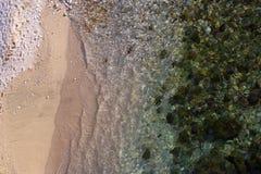 报道海底的绿藻类 免版税图库摄影
