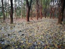 报道湿地面的下落的叶子 库存图片