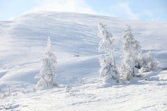 报道的冷杉山雪结构树冬天 图库摄影