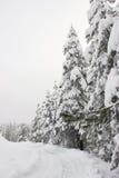 报道的叶子雪冬天 图库摄影