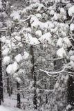 报道的叶子雪冬天 免版税库存图片