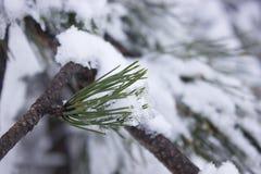 报道的叶子雪冬天 免版税图库摄影