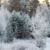 报道的树冰横向结构树冬天 免版税库存照片