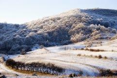 报道的森林横向雪冬天 免版税库存照片