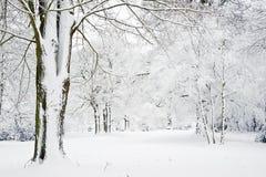报道的森林横向雪冬天 库存照片