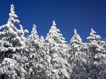 报道的森林横向雪结构树冬天 免版税库存图片