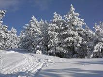 报道的森林横向雪结构树冬天 库存图片