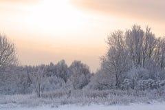 报道的森林雪冬天 库存照片