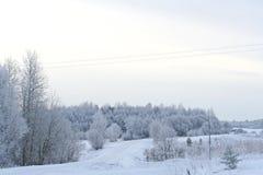 报道的森林雪冬天 免版税库存图片