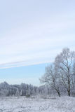 报道的森林雪冬天 库存图片