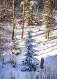 报道的森林雪结构树冬天 库存图片