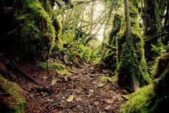 报道的森林青苔场面 免版税库存照片