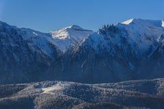 报道的横向山松雪云杉冬天 库存照片