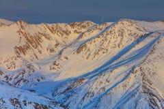 报道的横向山松雪云杉冬天 库存图片