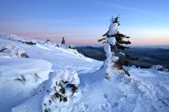 报道的横向雪多雪的结构树ural冬天 免版税库存图片