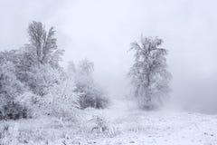 报道的横向雪结构树冬天 库存照片