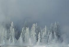 报道的雪云杉冬天 库存照片