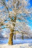 报道的雪结构树冬天 库存图片