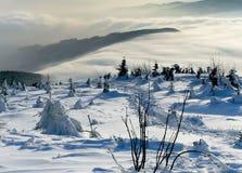 报道的雪结构树冬天 免版税库存照片