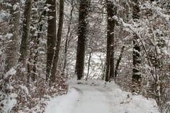 报道的雪结构树冬天 库存照片