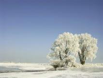 报道的霜横向结构树冬天 库存照片