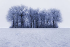 报道的霜结构树冬天 免版税库存图片
