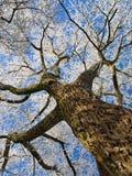 报道的霜结构树冬天 库存图片