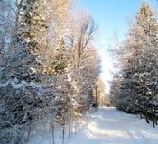 报道的冻结的闪亮指示nigth路雪街道结构树冬天 图库摄影