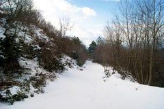 报道的冻结的闪亮指示nigth路雪街道结构树冬天 免版税库存照片