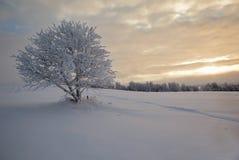 报道的fi横向偏僻的雪结构树冬天 免版税库存照片