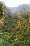 报道La Soufriere火山,瓜德罗普的地面bromeliads和灌木的豪华的植被 库存照片