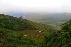 报道ricefields的雾在Sapa,越南 图库摄影