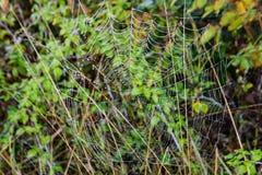 报道Spider's网的早晨露水 免版税库存图片