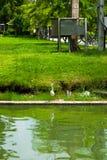抬头在水,等待的牺牲者, Lumpini公园,曼谷边缘  库存照片