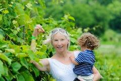 抱孩子的资深妇女在葡萄园里 免版税图库摄影