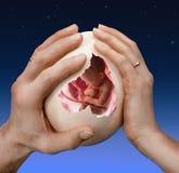 抱着在一个大鸡蛋里面的男人的和妇女的手一个婴孩 免版税库存照片
