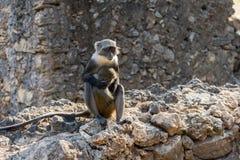抱着它的婴孩的猴子 库存图片
