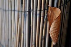 抵抗的叶子 免版税图库摄影