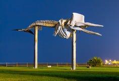 抹香鲸骨骼雕象 库存照片