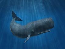 抹香鲸 库存图片