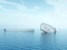抹香鲸 免版税图库摄影